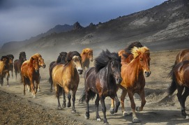 horses-2360048_1920