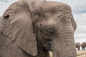 elephant-1526709_1920.jpg