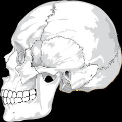skull-31060_1280.png